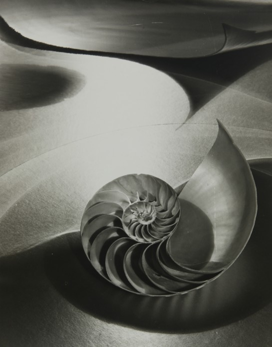 Carlotta Corpon, Space Composition with Chambered Nautilus
